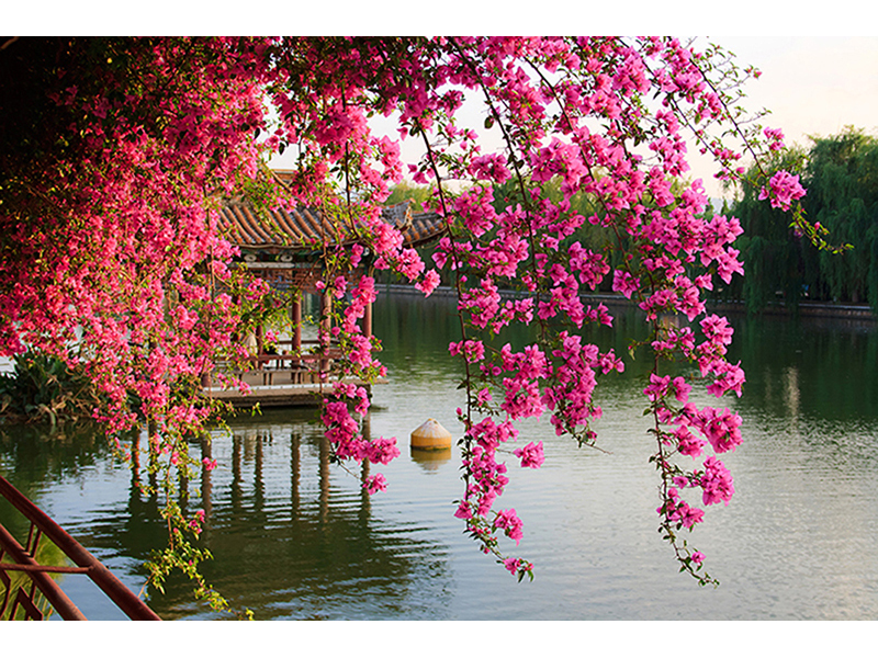 Парк в Китае 1331