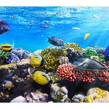 Под водой моря