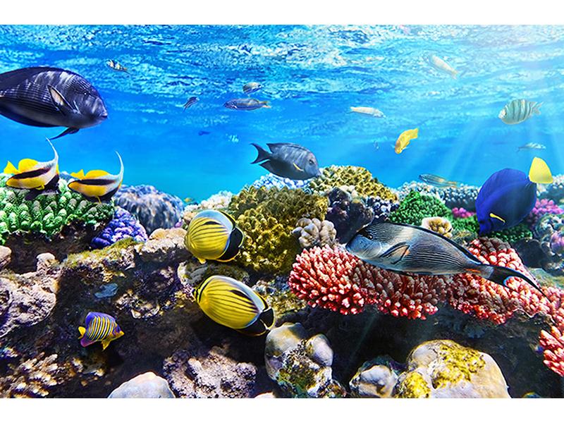Под водой моря 2467