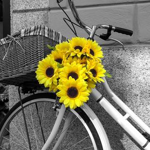 Подсолнухи и велосипед