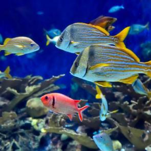 Подводный мир 01570