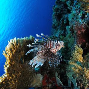 Подводный мир 01579