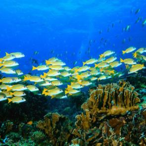 Подводный мир 01581