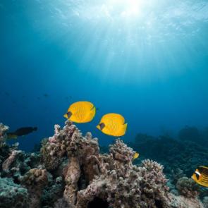 Подводный мир 01586