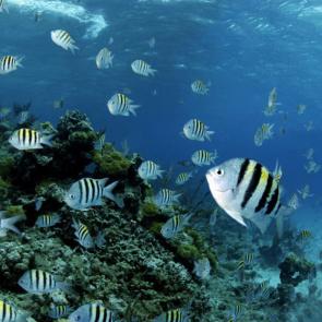 Подводный мир 01587