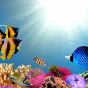 Подводный мир 01588