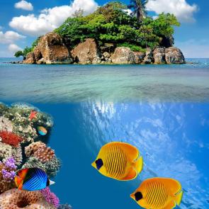 Подводный мир 01589