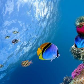 Подводный мир 01590