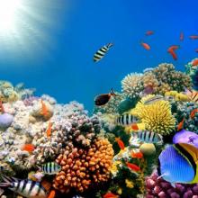 Подводный мир 01593