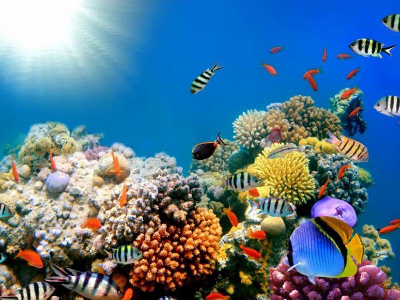 Подводный мир 01593 7347