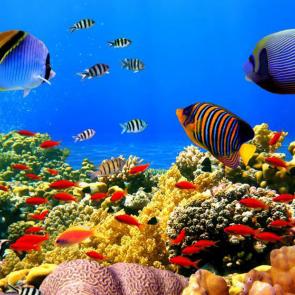 Подводный мир 01594