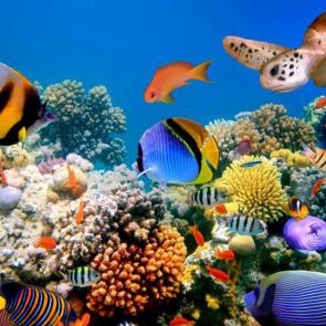 Подводный мир 01595