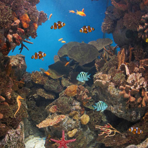 Подводный мир 01596