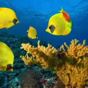 Подводный мир 01598