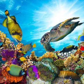 Подводный мир 07751