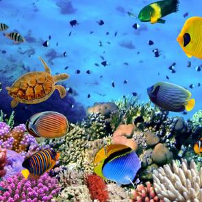 Подводный мир 08514