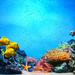 Подводный мир 11229
