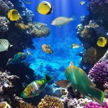 Подводный мир 12789