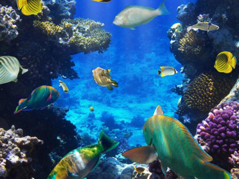 Подводный мир 12789 7356