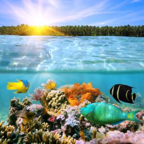 Подводный мир 13139
