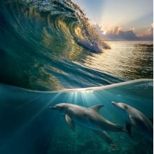Подводный мир 13260