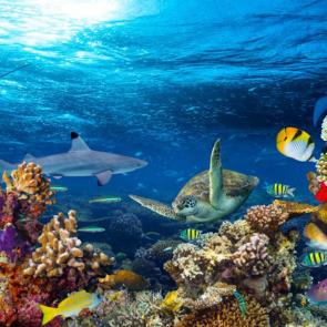 Подводный мир 14056