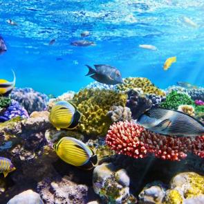 Подводный мир 14807