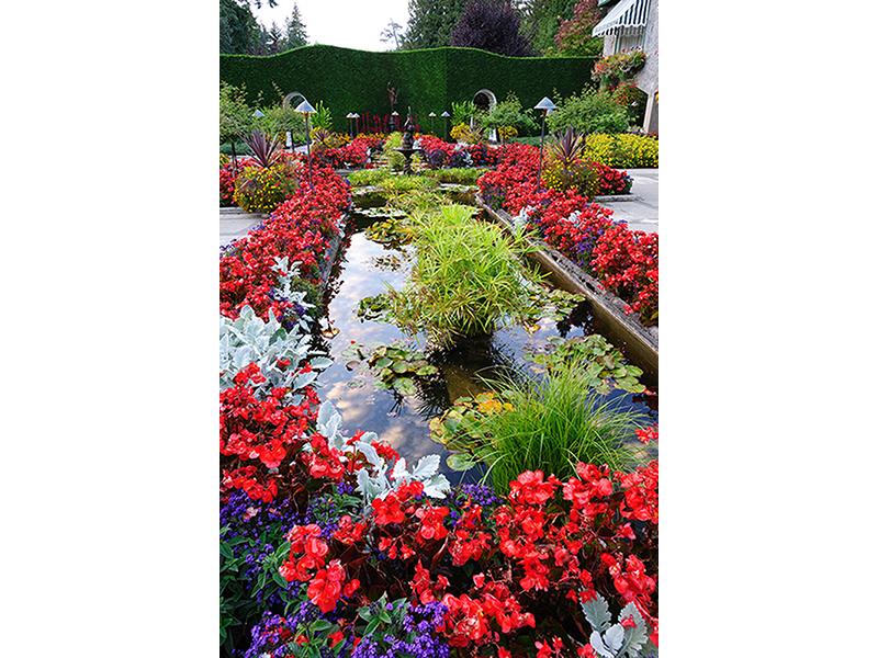 Прекрасный сад 1277