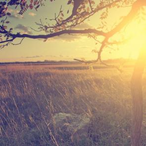 Природа рассвет 11302