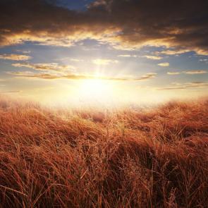 Природа рассвет 11305