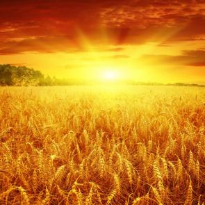 Природа рассвет 11371
