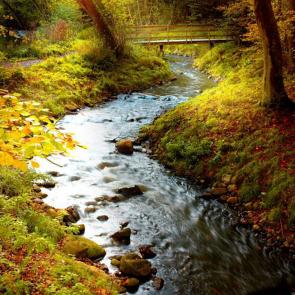 Природа река 01320