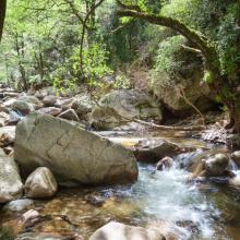 Природа река 11725