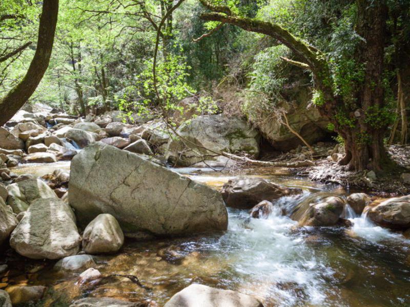 Природа река 11725 7408