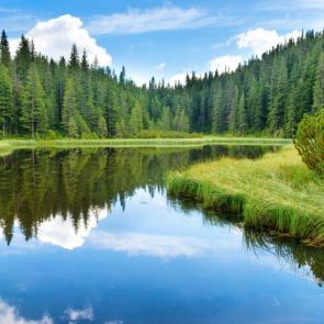 Природа река 15537