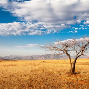 Природа сафари 11270