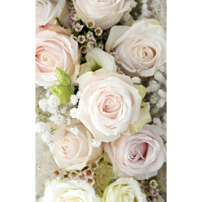 Пудровые розы