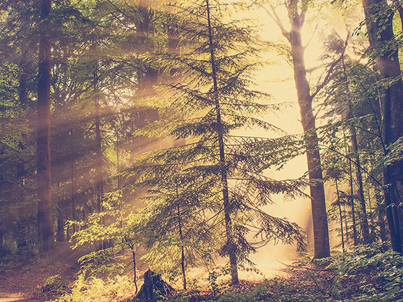 Рассвет в лесу 1257
