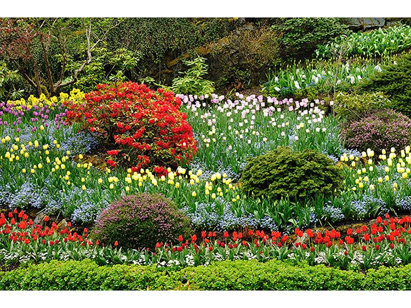Разнообразие цветов 1262