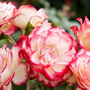 Романтичные цветы