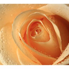 Роза с каплями
