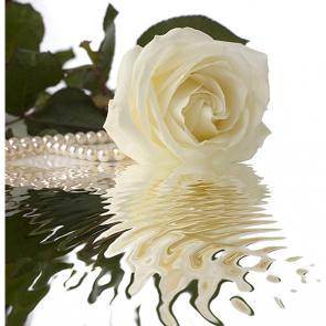Роза с жемчугом