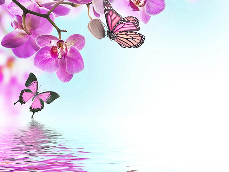 Розовая мечта 2399