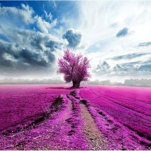 Розовое поле
