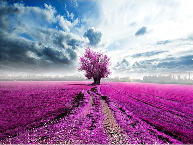 Розовое поле 1228