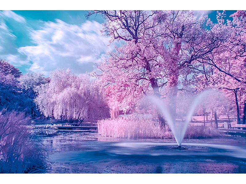 Розовый парк 1225