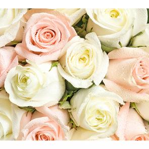 Розы шампань