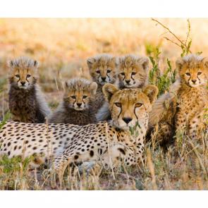 Леопард 5744