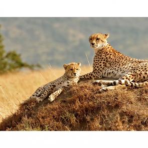 Леопард 5745
