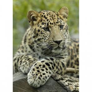 Леопард 5747